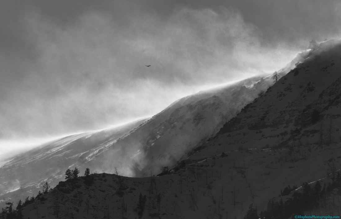 Blowing Snow and The Golden Eagle, Wind River Canyon, Wyoming.
