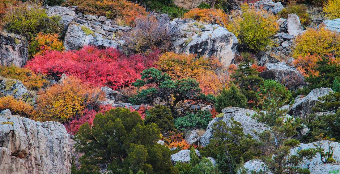 Wyoming Landscape Fall Foliage